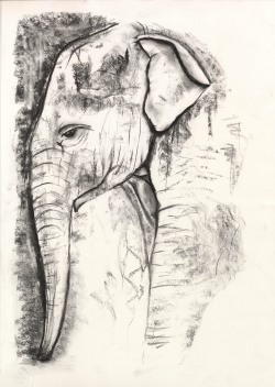 Elephant in Charcoal
