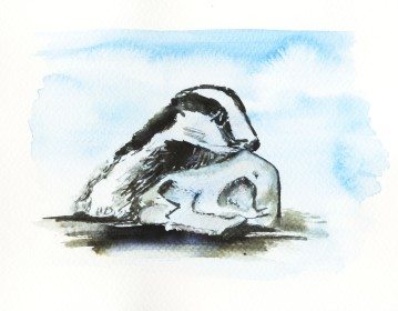 Badger in Ink and Watercolour