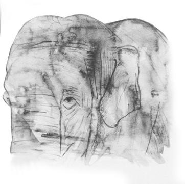 Elephant Sketch