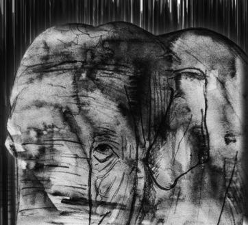 Elephant Sketch2.3