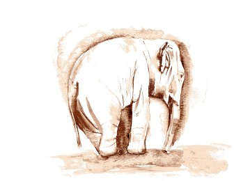 Elephant in Watercolour